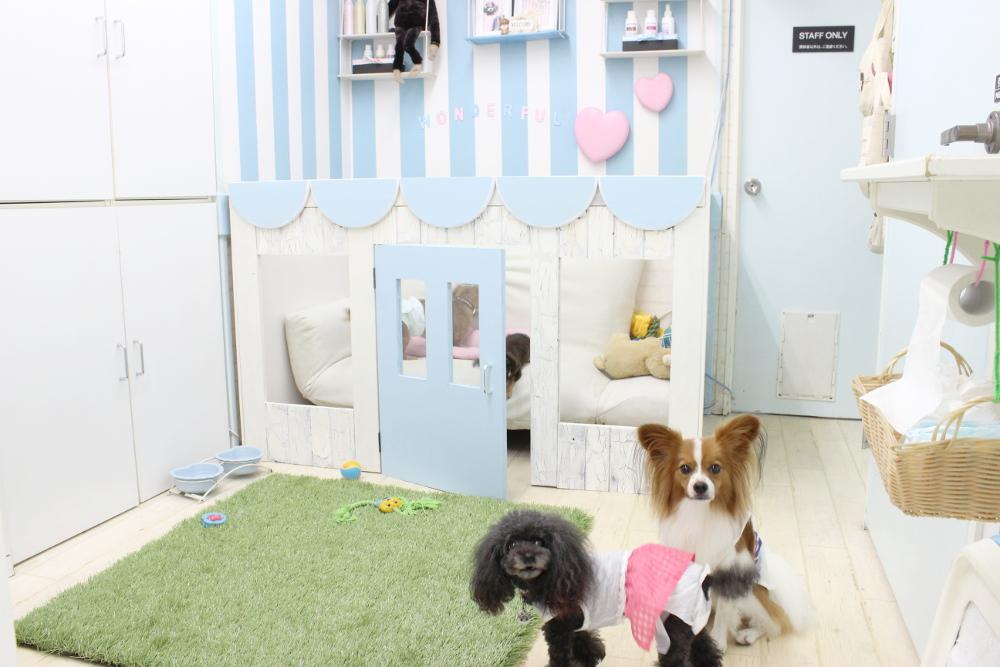 Pet House わんだふる