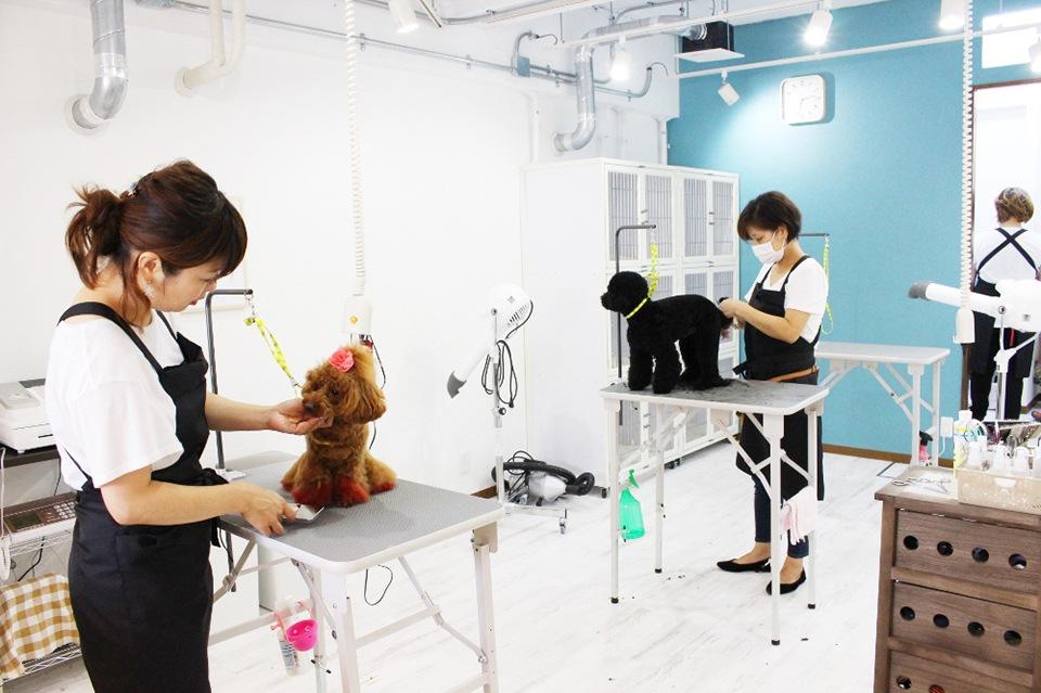 Dog サロン Qoo 鳴尾店