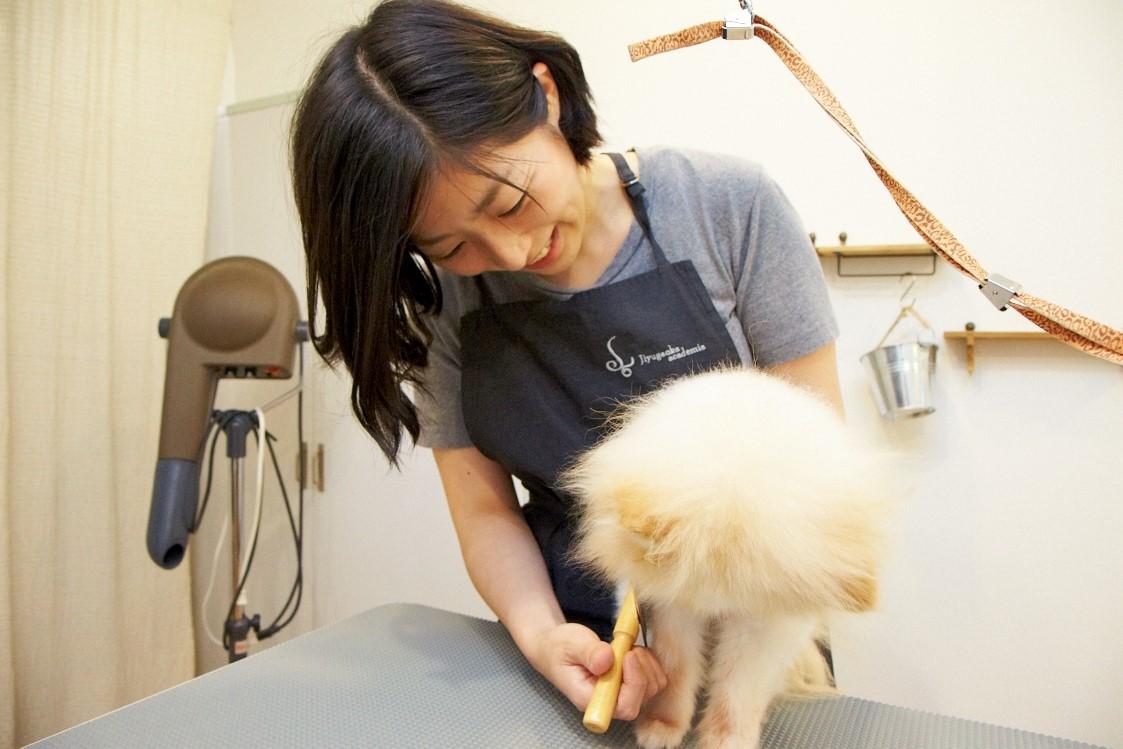 Trimming salon igusa(イグサ)