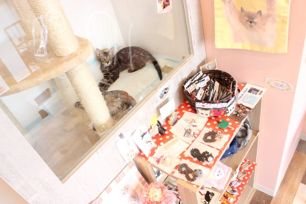 猫の診療室モモ