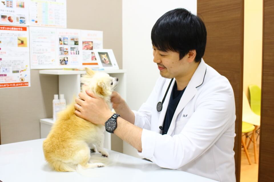 とよす動物病院