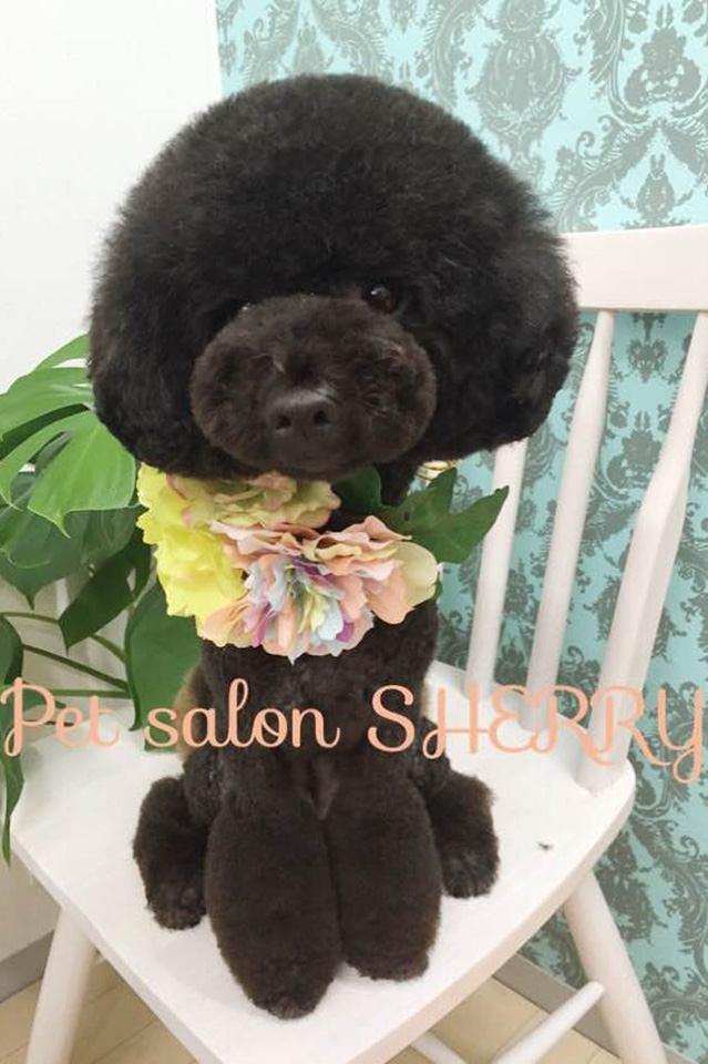 ドッグソープのお店 Pet Salon SHERRY