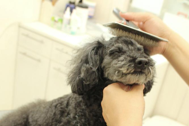dog salon mischief