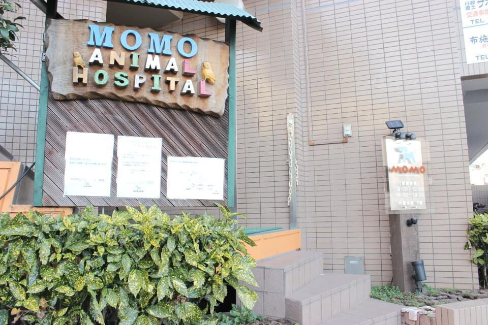MOMOどうぶつ病院