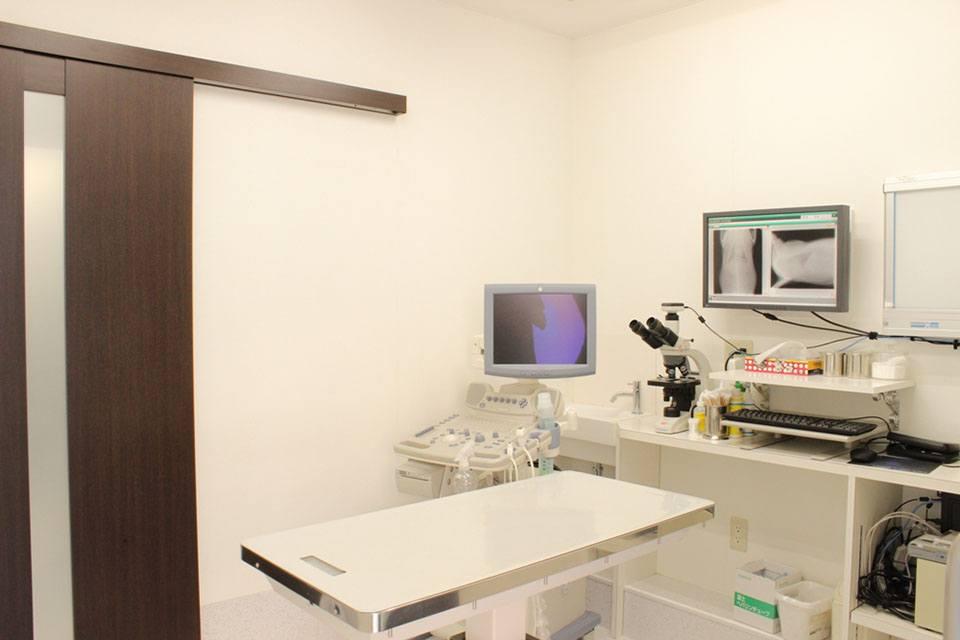 くりの木動物病院