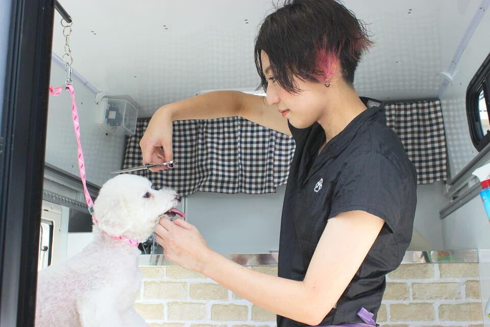Dog Salon Tickle Tickle