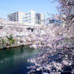 綾瀬市でトリミング!おすすめのペットサロン3選!送迎可能