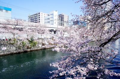 横浜市南区でトリミング!愛犬愛猫が喜ぶペットサロン3選!