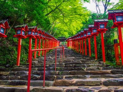 京都市左京区の動物病院4選!評判の施設を厳選