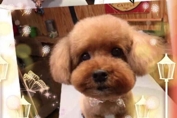 ドッグサロン ワンルーム 犬写真