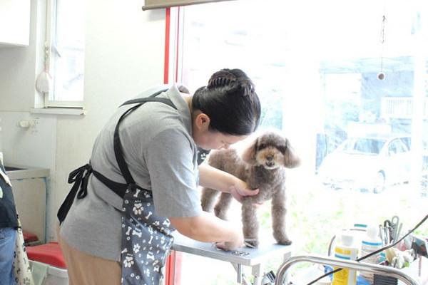 Doggy Wash Twinkle スタッフ写真