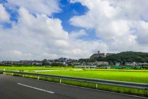 横浜市泉区でトリミング!愛犬が喜ぶペットサロン3選!