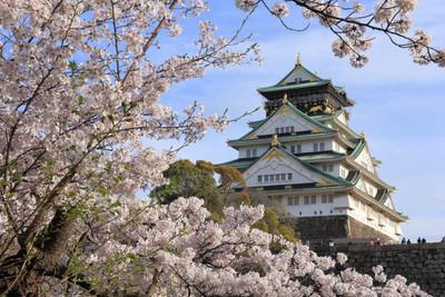 大阪市でおすすめのペットホテル5選!24時間対応、猫専門など