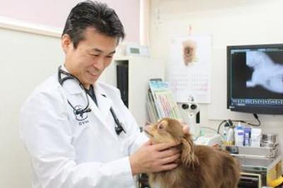 七里動物病院の診察