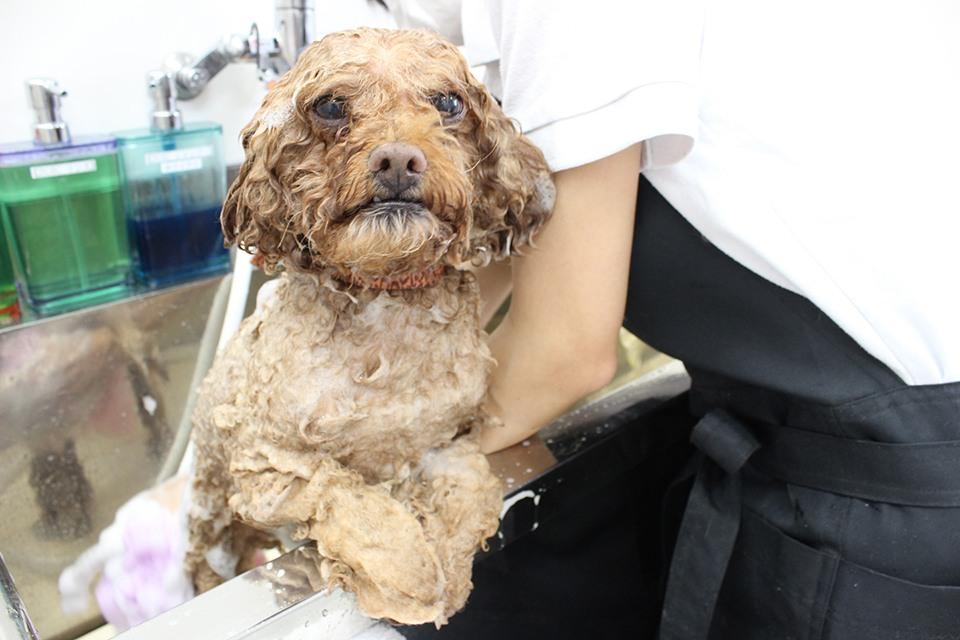 フルール動物病院シャンプー写真