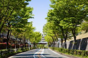 横浜市青葉区で評判の動物病院2選!口コミ掲載