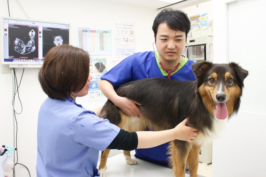 エルムス動物医療センターららぽーと柏の葉院診察中写真