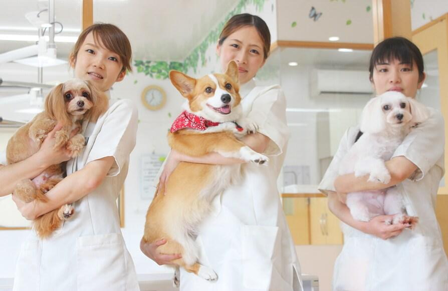 アニファ動物クリニック 豊四季病院 スタッフ写真
