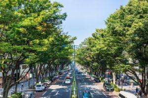 渋谷区で人気のトリミングサロン10選!