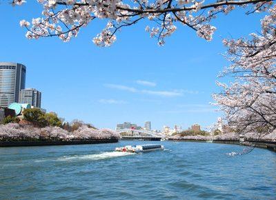 大阪市都島区でトリミング!人気のペットサロン6選!