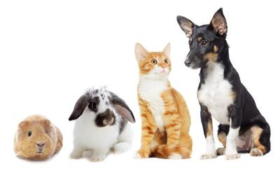 豊田市で土曜・日曜・祝日に診療している動物病院【6選】