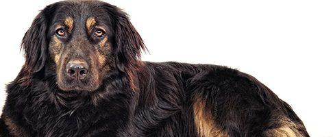 神戸市で大型犬OKのおすすめトリミングサロン【11選】