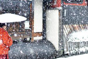 京都市でペット用品販売もしているトリミングサロン