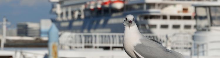 横浜市で評判!鳥の診療ができる動物病院【10選】