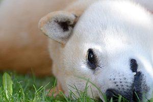 佐倉市で避妊手術・去勢手術ができるおすすめ動物病院