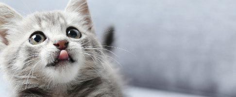 町田市でトリミング!猫OKのペットサロン【2選】