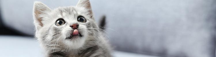 町田市でトリミング!猫OKのペットサロン【3選】