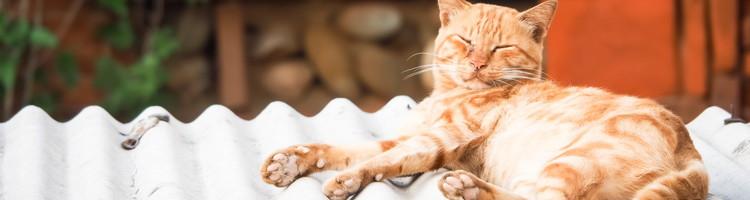 杉並区で猫ちゃんもOKのトリミングサロン特集