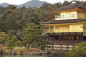 京都市でしつけ教室を行っている評判の動物病院8選!口コミあり