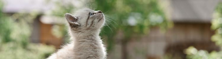 世田谷区でトリミング!猫にも対応【5選】