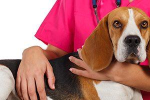 海老名市で避妊 、去勢手術が受けられるおすすめ動物病院5選
