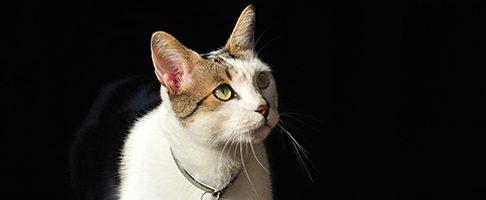 大田区で猫ちゃんにも対応してくれるトリミングサロンの特集!【7選】