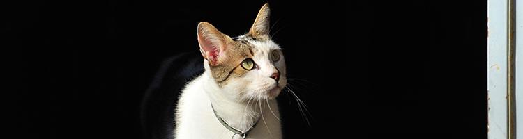 大田区で猫ちゃんにも対応してくれるトリミングサロンの特集!