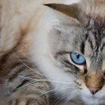 目黒区で猫におすすめのトリミングサロン特集