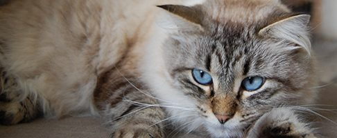 目黒区で猫におすすめのトリミングサロン特集【7選】