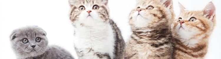 猫ちゃんのカットもOKな柏市のトリミングサロン特集