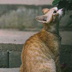 中野区で犬猫の予防接種!評判の動物病院【3選】