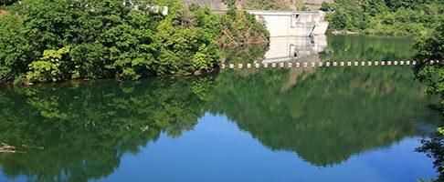 河内長野市でトリミングをするならココ!【4選】