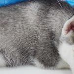 さいたま市で予防接種!おすすめ動物病院【4選】