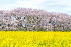 奈良市で写真撮影サービスが評判のトリミングサロン3選