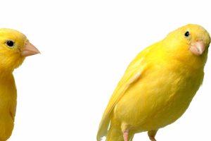 鳥も受診できる大阪市の動物病院