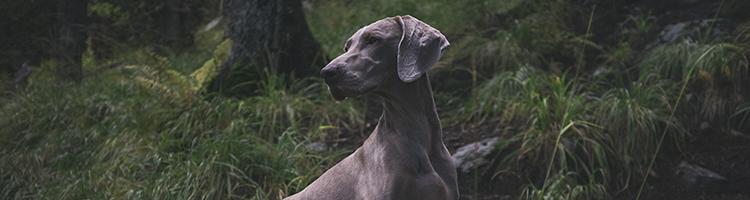 港区(東京)で大型犬も受付しているトリミングサロン3選