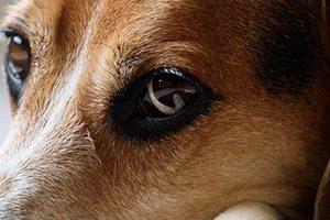 練馬区で大型犬歓迎のトリミングサロン特集