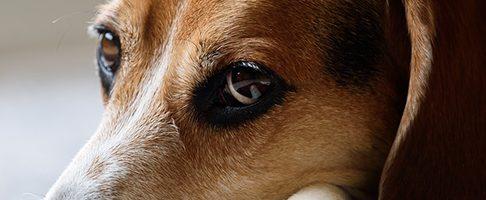 練馬区で大型犬歓迎のトリミングサロン【6選】