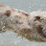 杉並区の大型犬歓迎のトリミングサロン
