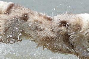 中野区で大型犬のトリミングがおすすめのペットサロン特集